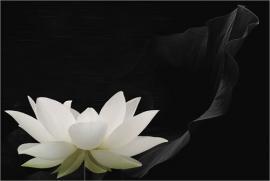 """Phật dạy: Điều công bằng nhất trên thế gian này chính là """"Nhân Quả"""""""