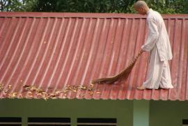 Thiên tai, động đất, sóng thần có phải do chiêu cảm của việc sát sanh và nạo phá thai?