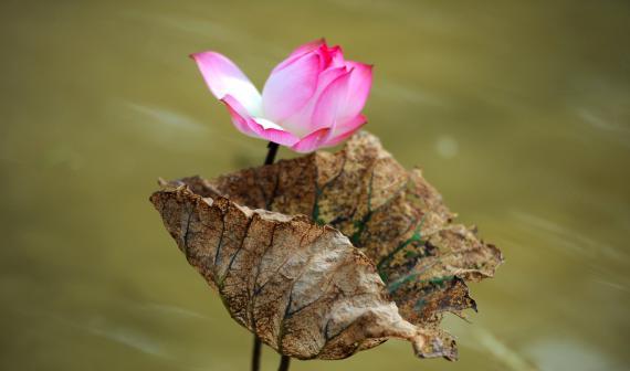 Suy nghiệm lời Phật: Có sinh ắt có diệt