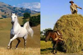 Lão hòa thượng kể câu chuyện về 2 con ngựa