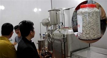 Bên trong nhà máy sản xuất cao Callus sâm Ngọc Linh