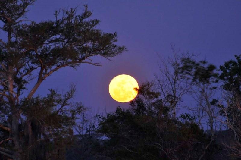 Kết quả hình ảnh cho Phát tâm Bồ Đề học thuyết duy tâm qua lăng kính Lăng Già