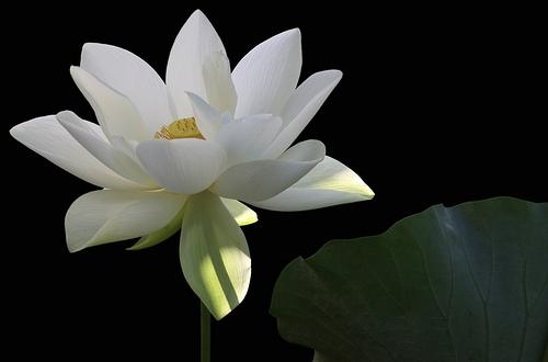 Kết quả hình ảnh cho Cái đẹp của Phật giáo trong thời Lý Trần