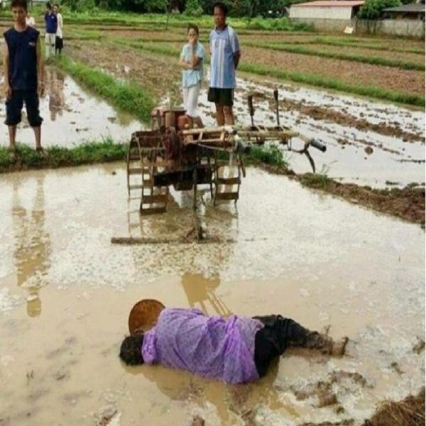 Đau xót trước cảnh người cha chết gục trên thửa ruộng đang cày vì kiệt sức