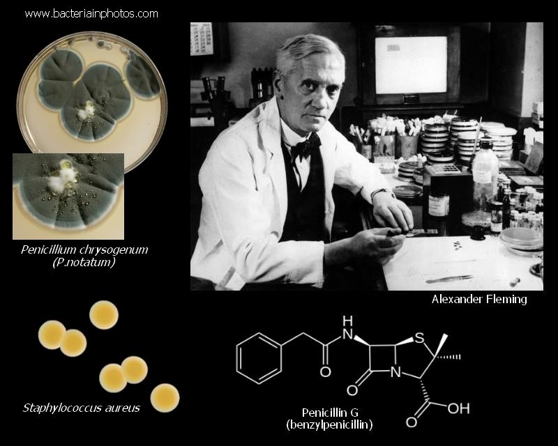 Penicilin - Alexander Fleming