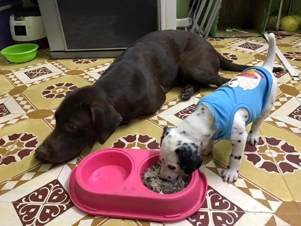 Kết quả hình ảnh cho Xin hỏi một tăng sĩ ở chùa nuôi chó và cho chó ăn thịt sống có được không?