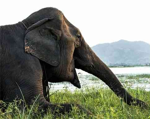 Vì sao Đức Phật nhập mẫu thai trong hình tướng voi trắng?