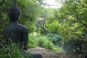 Ảnh minh họa Đức Phật ngồi thiền trong rừng