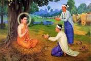 Suy nghiệm lời Phật: Cày ruộng & gieo hạt - Quảng Tánh